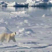 By when will summer Arctic Sea ice coverage drop to zero?